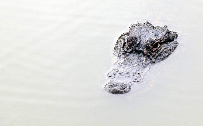 Later Gator…